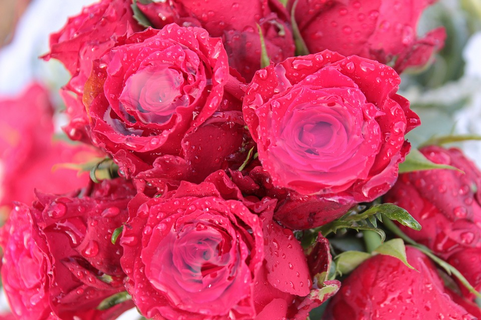 bouquet-of-roses-1279378_960_720